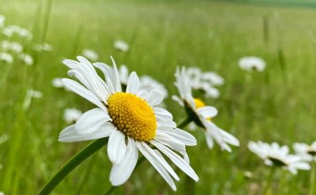 Blume Auf Wiese Hinergrund