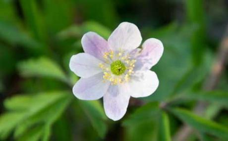 Blume M Kl
