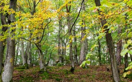 Herbstwald M