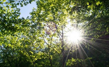 Sonnenstrahlen Waldach