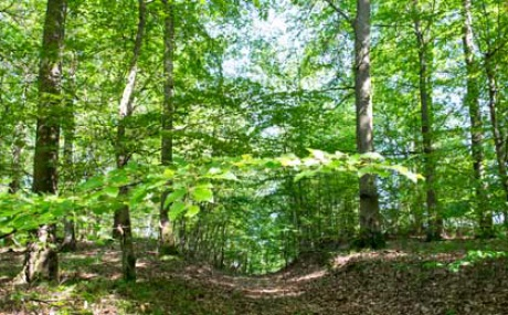 Weg In Den Wald M