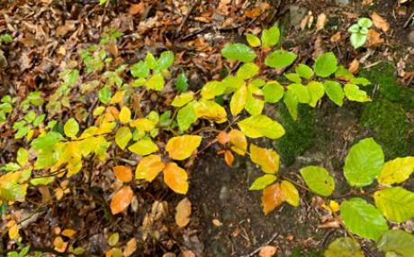 Herbstast Blaetter