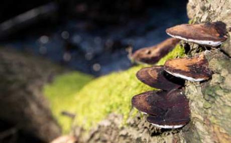 Pilze Baumstamm