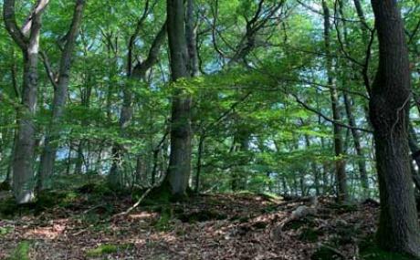 Sommerwald Kl