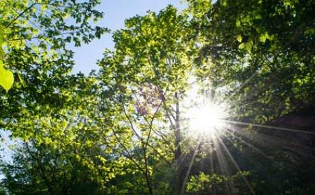 Sonnenstrahlen Wald M Kl