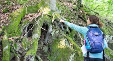 Den Wald entdecken