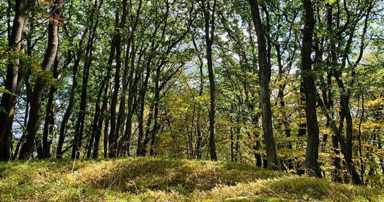 Lichtung Herbstwald
