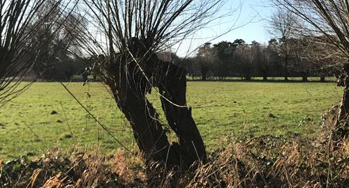 Nrt Baum